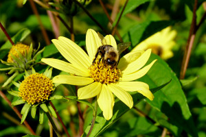 photo of bumblebee on flower